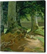 Beech Trees In Frederiksdal Near Copenhagen Canvas Print by Christian Ernst Bernhard Morgenstern