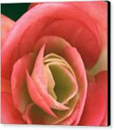 Begonia Rose Canvas Print