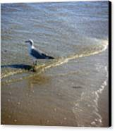 Being One With The Gulf - Reflecting Canvas Print