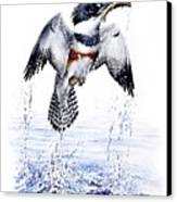 Belted Kingfisher Canvas Print by Christopher Cox