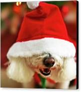 Bichon Frise Dog In Santa Hat At Christmas Canvas Print