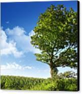 Big Elm Tree Near Corn Field Canvas Print