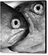 Big Fish Eat Small Fish Canvas Print
