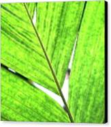 Big Green Leaf . 7d5763 Canvas Print by Wingsdomain Art and Photography