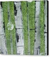 Birch - Green 1 Canvas Print by Jacqueline Athmann