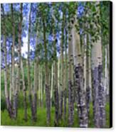 Birch Forest Canvas Print by Julie Lueders