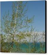 Birch Tree Over Lake Canvas Print