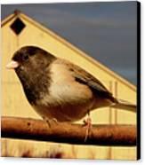 Bird House . 40d11078 Canvas Print