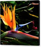 Bird Of Paradise Flower Canvas Print by Brian Harig