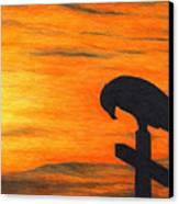 Bird Of Pray Canvas Print