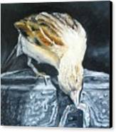 Bird Original Oil Painting Canvas Print
