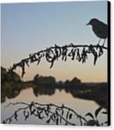 Bird Song At Last Light Canvas Print by Dave Gordon