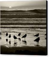 Birds On A Beach Canvas Print