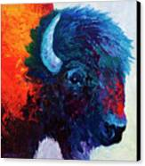 Bison Head Color Study I Canvas Print