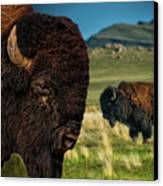Bison On The Plain Canvas Print by Paul W Sharpe Aka Wizard of Wonders