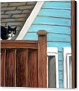 Black Alley Cat Canvas Print