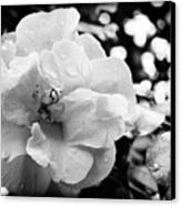 Black And White Rose Of Sharon Canvas Print by Eva Thomas