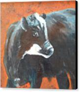 Black Beauty Canvas Print by Jean Ann Curry Hess
