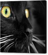 Black Cat 2 Canvas Print by Craig Incardone