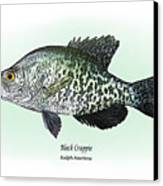 Black Crappie Canvas Print by Ralph Martens