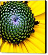 Black Eyed Susan Goldsturm Flower Canvas Print