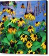 Black-eyed Susans At The Bag Factory Canvas Print