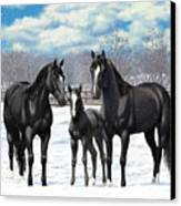 Black Horses In Winter Pasture Canvas Print
