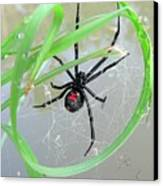 Black Widow Wheel Canvas Print by Al Powell Photography USA