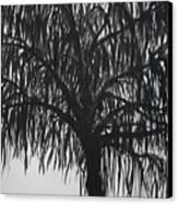 Black Willow Canvas Print