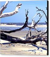 Blackbeard Island Beach Canvas Print by Thomas R Fletcher