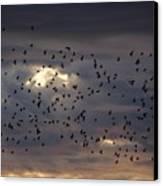 Blackbird Sunset Canvas Print