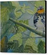 Blackburnian Warbler I Canvas Print