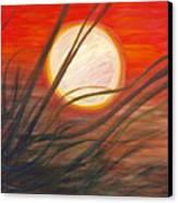 Blazing Sun And Wind-blown Grasses Canvas Print