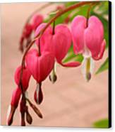 Bleeding Hearts In The Park Canvas Print