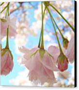 Blossoms Art Prints 52 Pink Tree Blossoms Nature Art Blue Sky Canvas Print