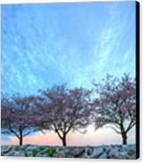 Blossoms Canvas Print by JC Findley