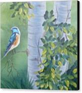 Blue Bird In A Birch  Canvas Print