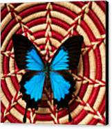 Blue Black Butterfly In Basket Canvas Print
