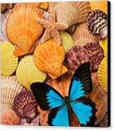 Blue Butterfly And Sea Shells Canvas Print by Garry Gay