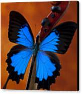 Blue Butterfly On Violin Canvas Print
