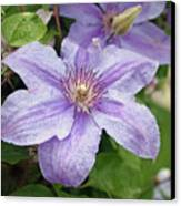 Blue Clematis Canvas Print
