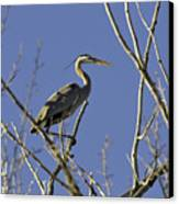 Blue Heron 22 Canvas Print by Roger Snyder