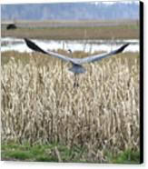 Blue Heron Flight Canvas Print