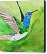 Blue Humming Bird Canvas Print