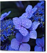 Blue Hydrangea Canvas Print by Noah Cole