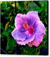 Blue Moon Hibiscus Canvas Print