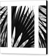 Blue Palma Triptych Canvas Print