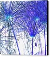 Blue Papyrus Canvas Print by Dana Patterson