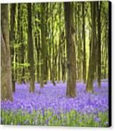 Bluebell Carpet Canvas Print by Jane Rix