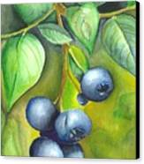 Blueberrries Canvas Print by Angela Armano